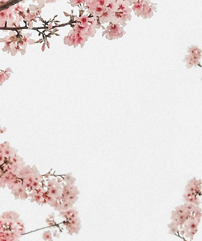 Background image of cherry blossoms